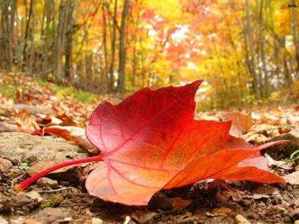 paysage automne