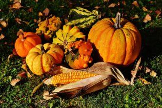 legumes-automne